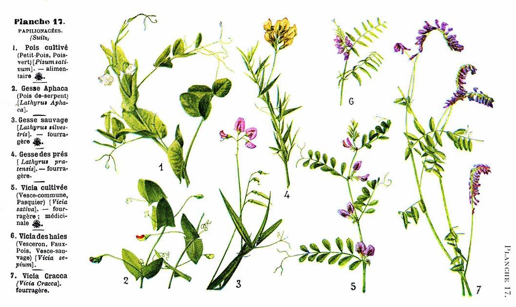Les noms des fleurs page 054 for Les noms des fleurs