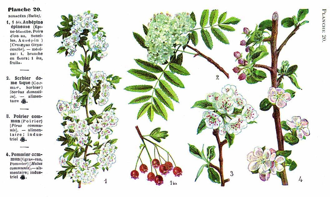 Les noms des fleurs page 254 for Les noms des fleurs