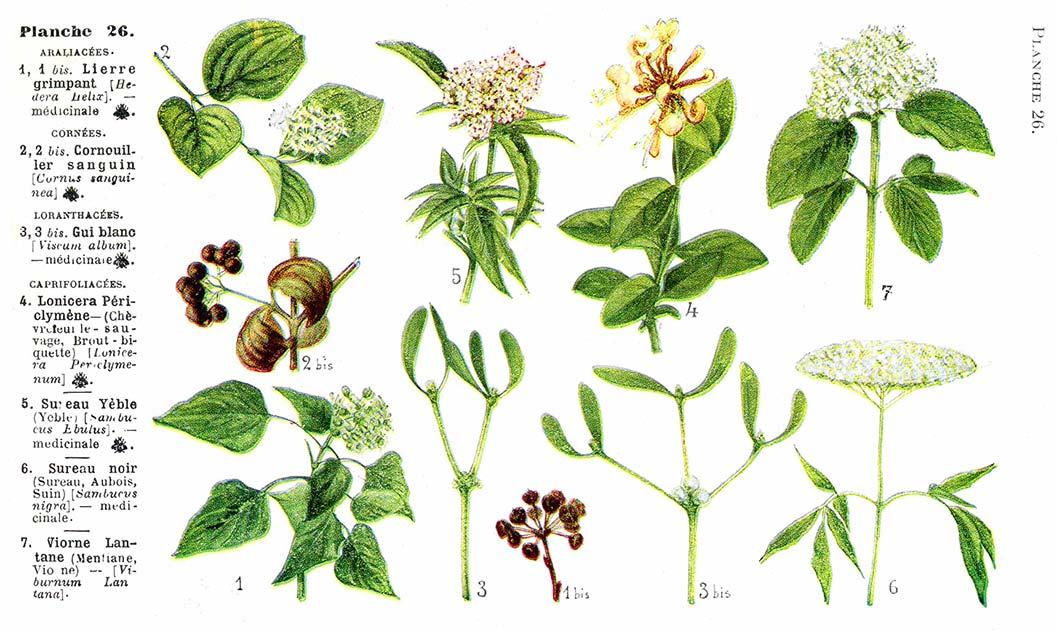 Les noms des fleurs page 105 for Les noms des fleurs