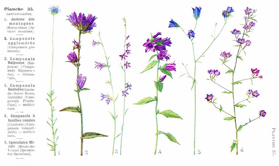 Les noms des fleurs page 210 for Les noms des fleurs
