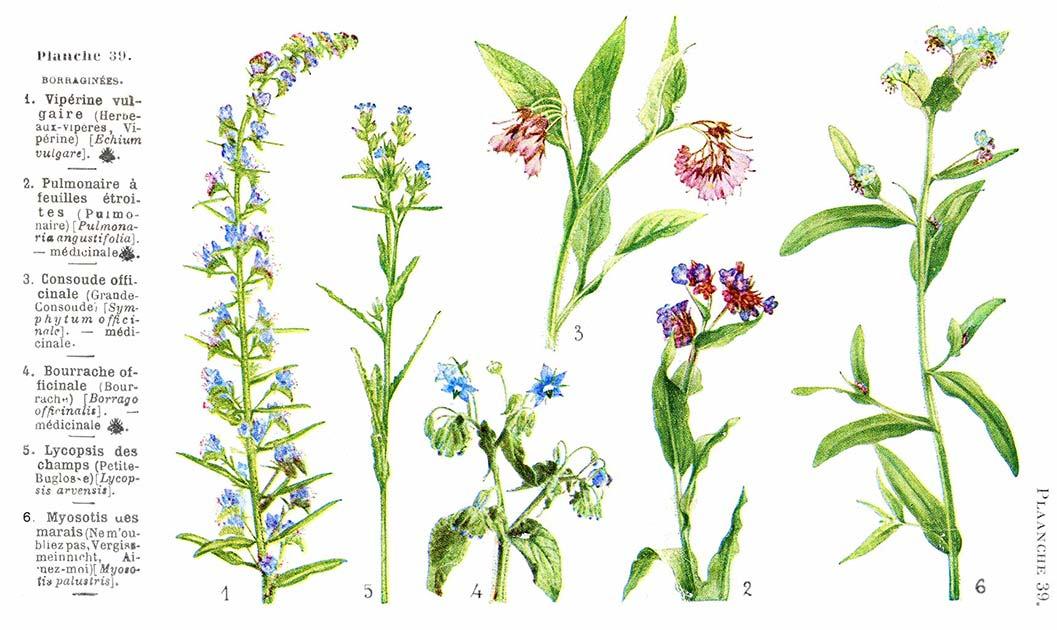 Les noms des fleurs page 014 for Les noms des fleurs