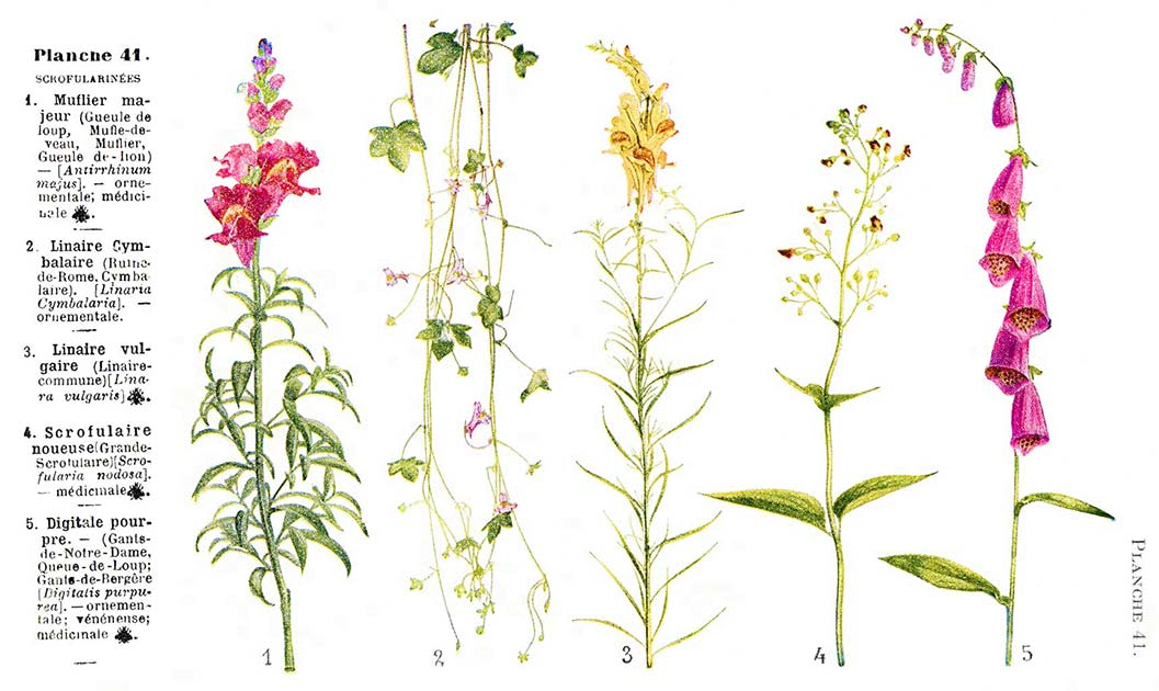 Les noms des fleurs page 161 for Les noms des fleurs
