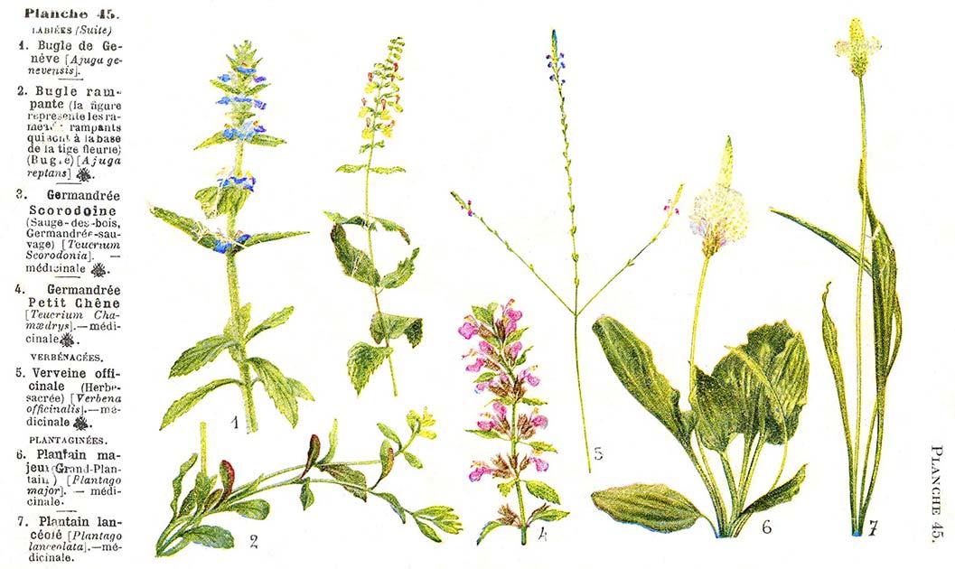 Les noms des fleurs page 027 for Les noms des fleurs